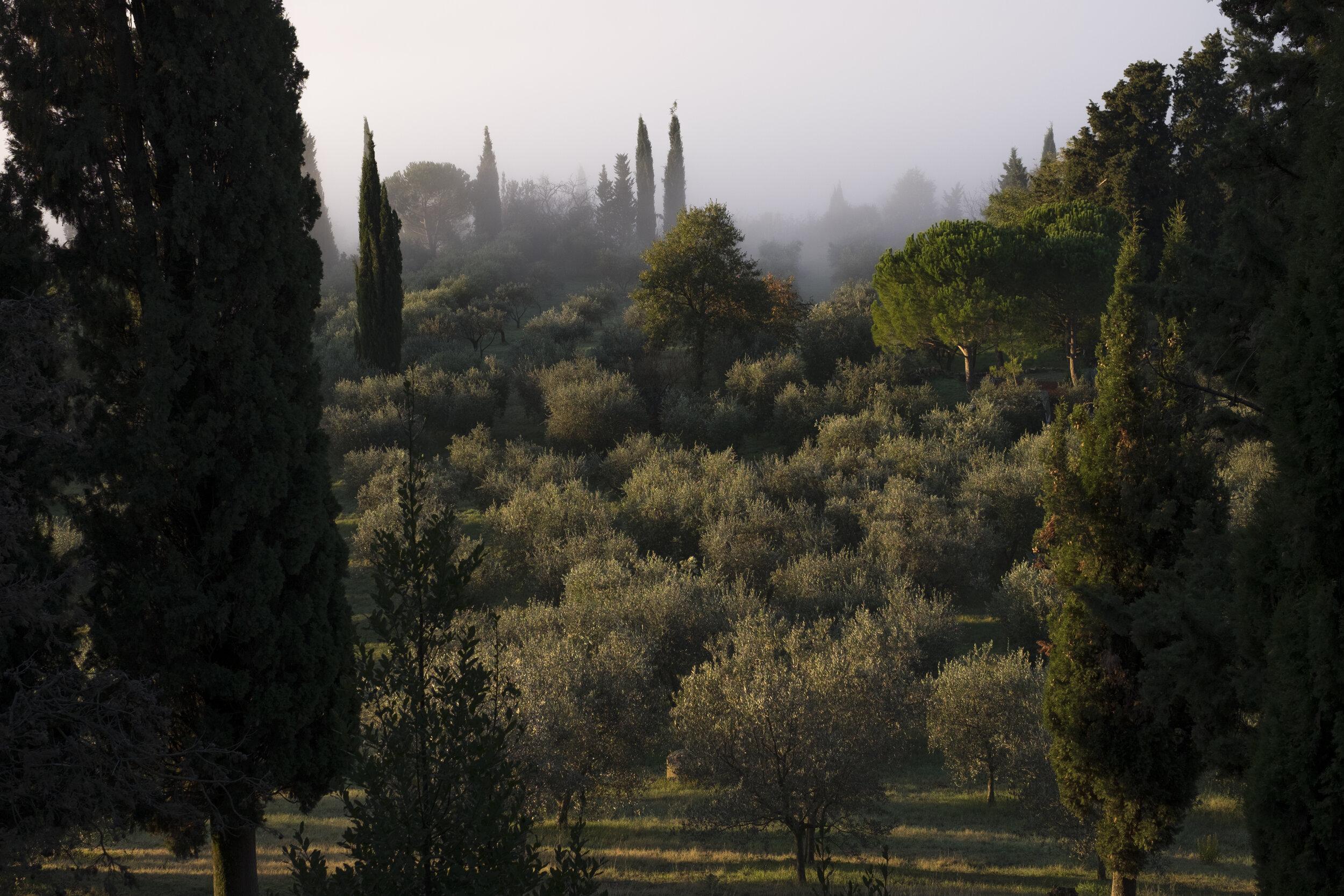 grove1.jpg