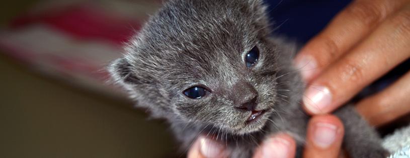 Napa Valley Animal Rescue - WCAL