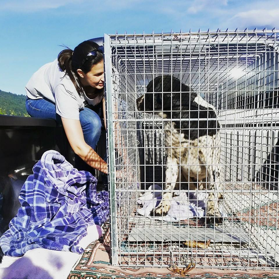 WCAL - Animal Rescue in Napa Valley