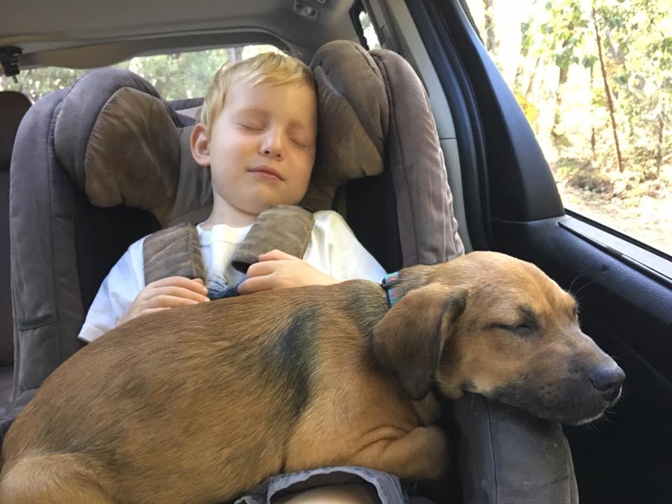 Napa Valley Animal Rescue