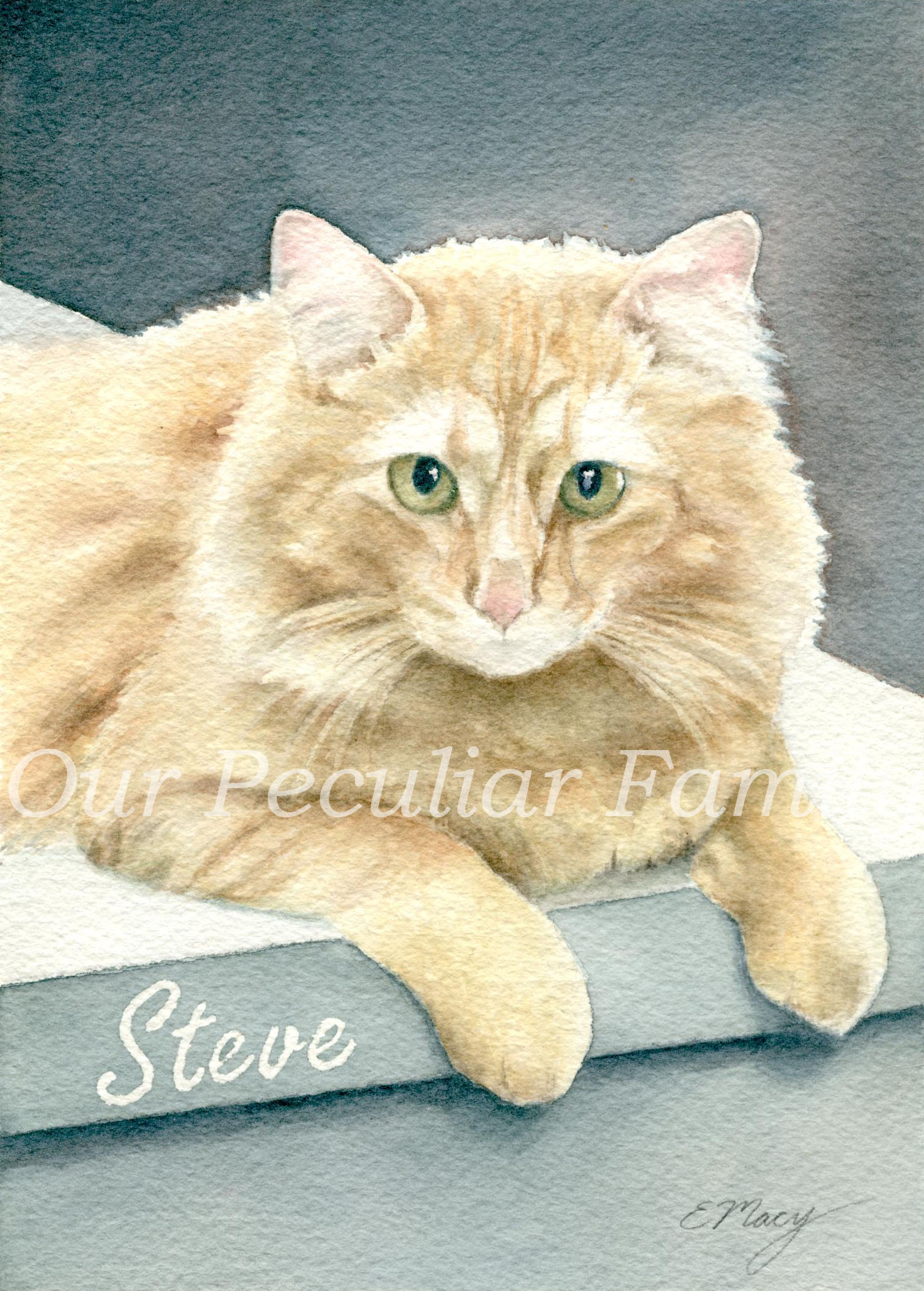 Steve ~ Watercolor by Elisabeth Macy