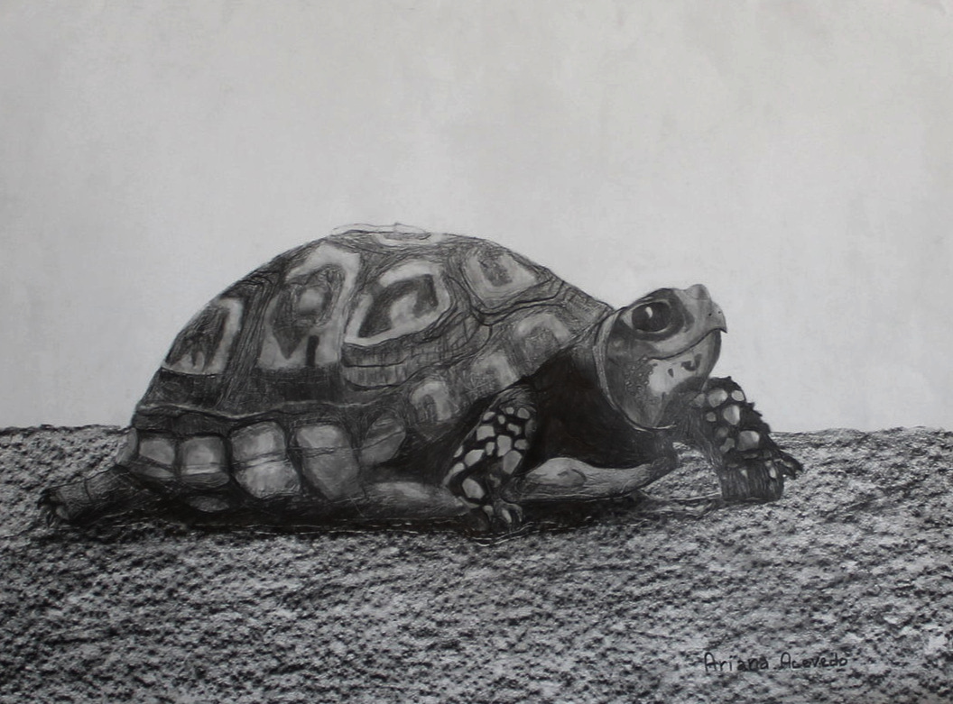 Beginning Drawing class - student age 12