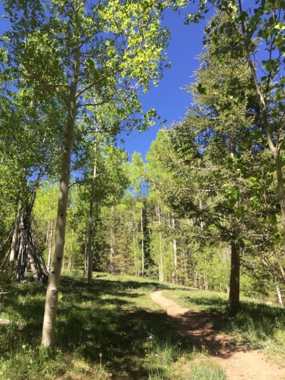 Aspen Vista Trail provides a green escape from the summer heat