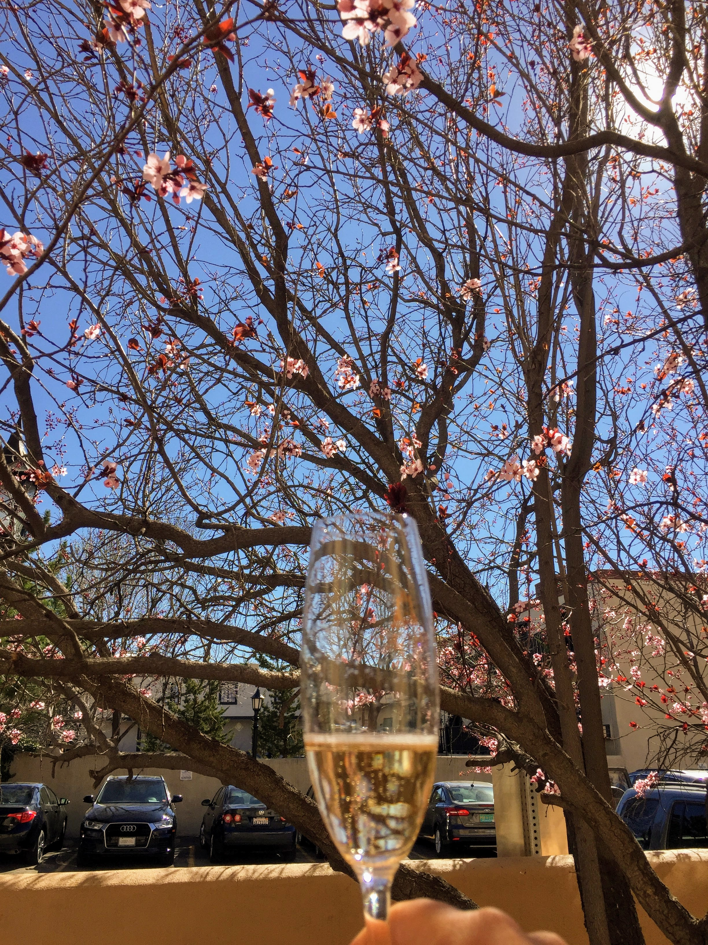 Spring is the perfect time to enjoy a sunny afternoon at  Gruet Santa Fe . Enjoy lounging on the patio underneath the cherry blossoms