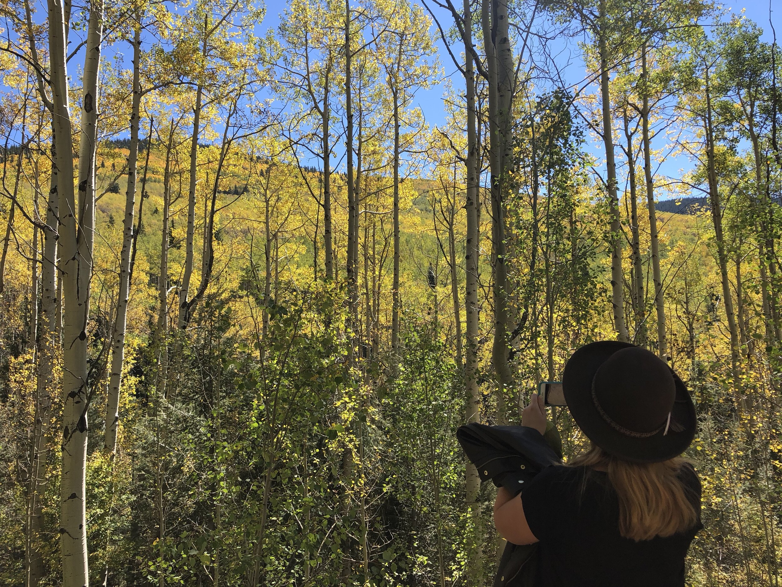 Leaf peeping on  Aspen Vista Trail  is one of our favorite fall activities