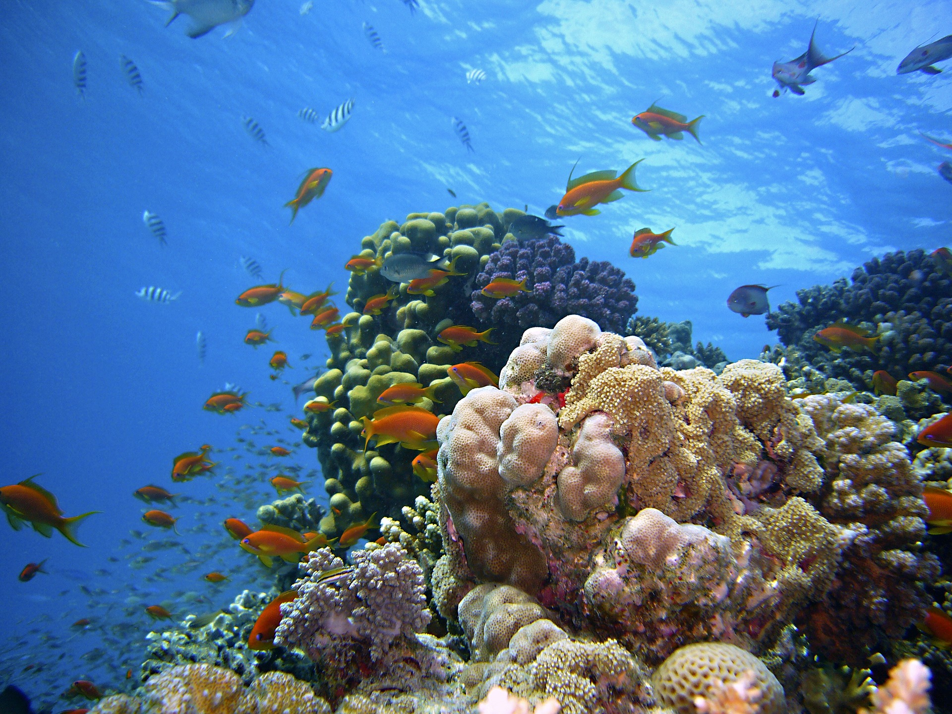 underwater-1656618_1920.jpg