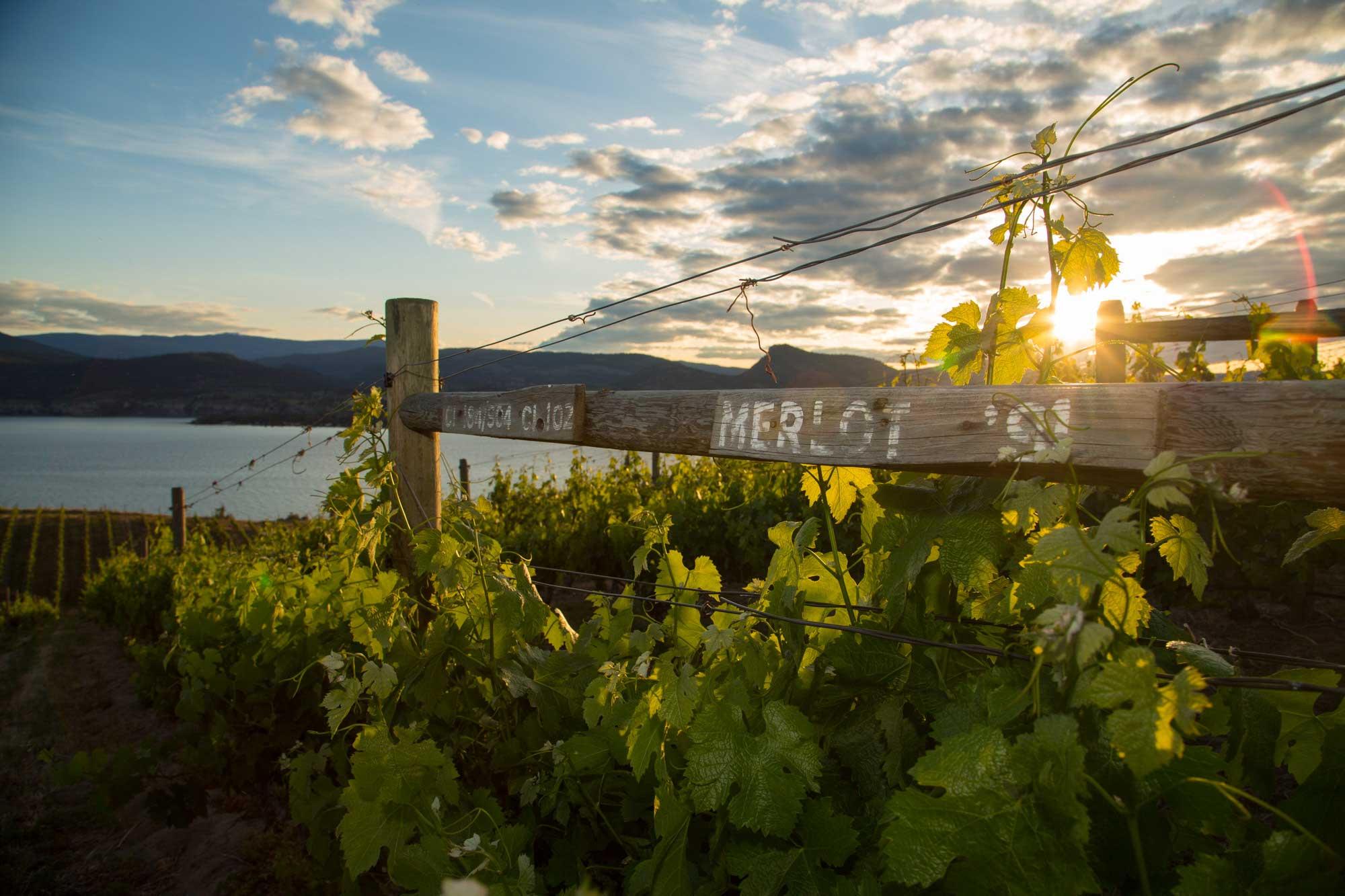 MacIntyre-Wine-Banner-1-6853.jpg