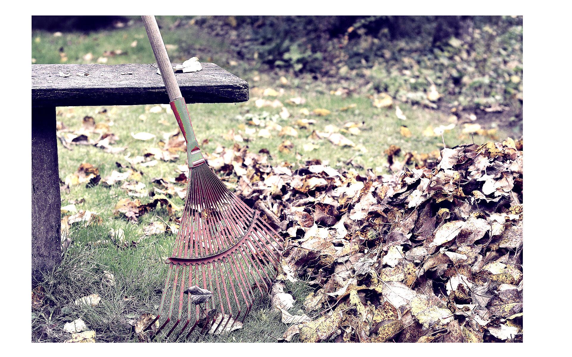 Autumn leaves rake.jpg