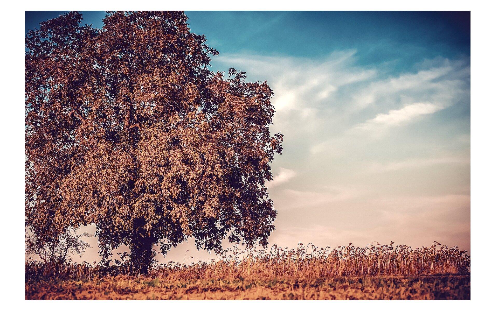 Carnation filter Autumn tree.jpg