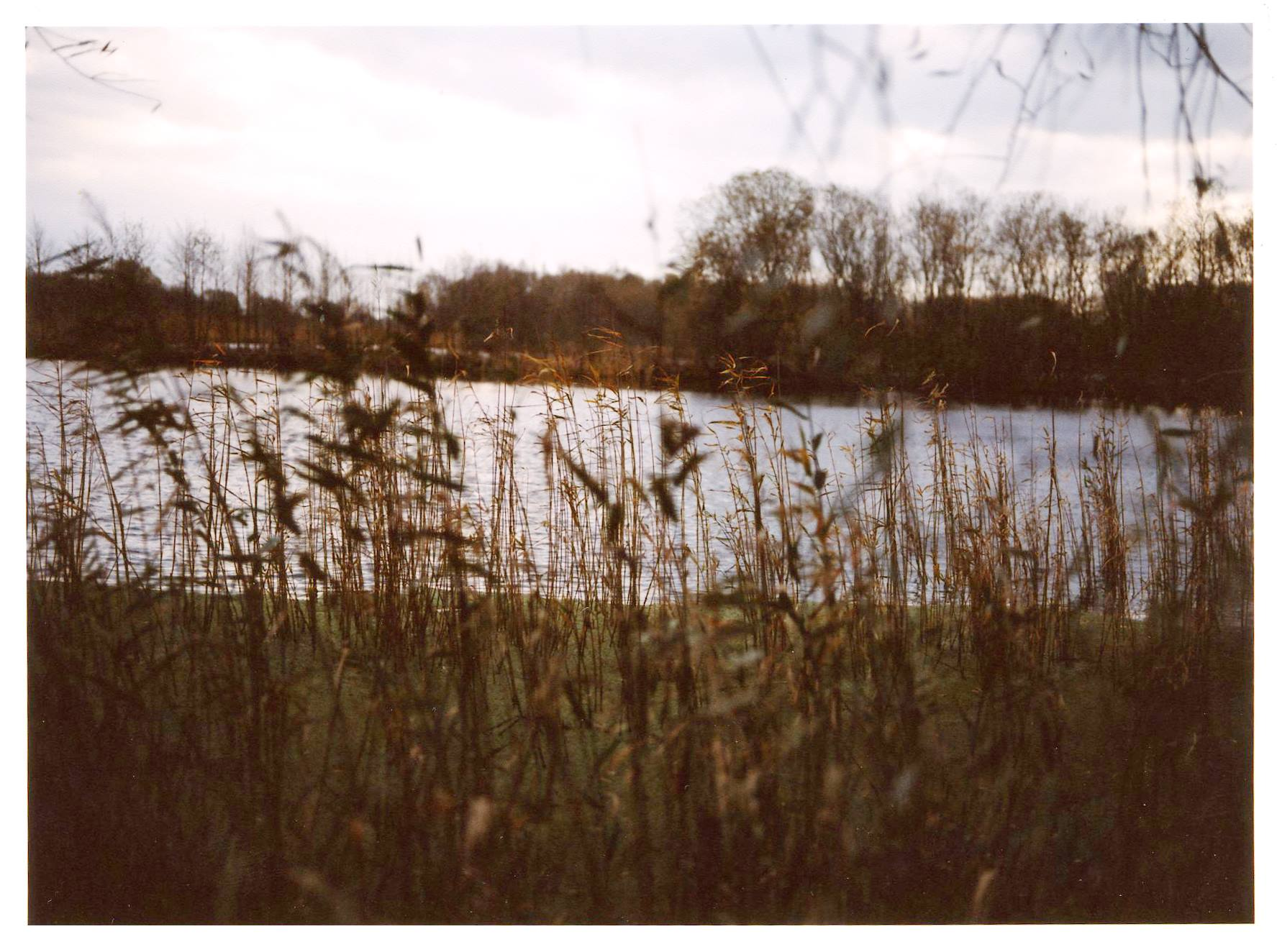 Reeds and mere at Westhay Moor. Photo by Clare Twomey.