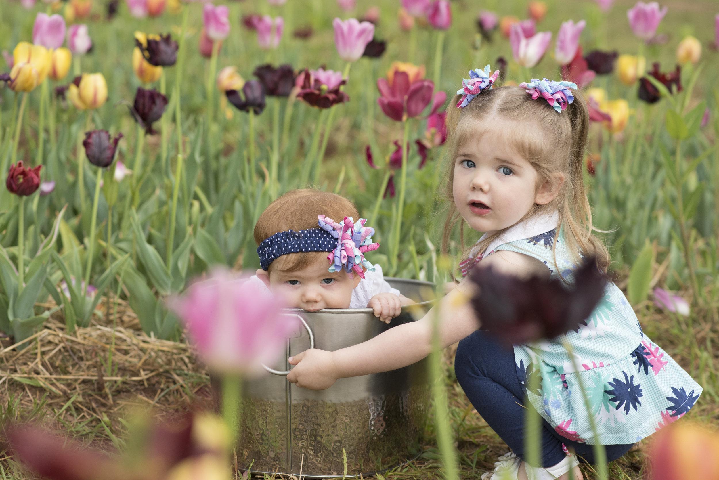 tulip6.jpg
