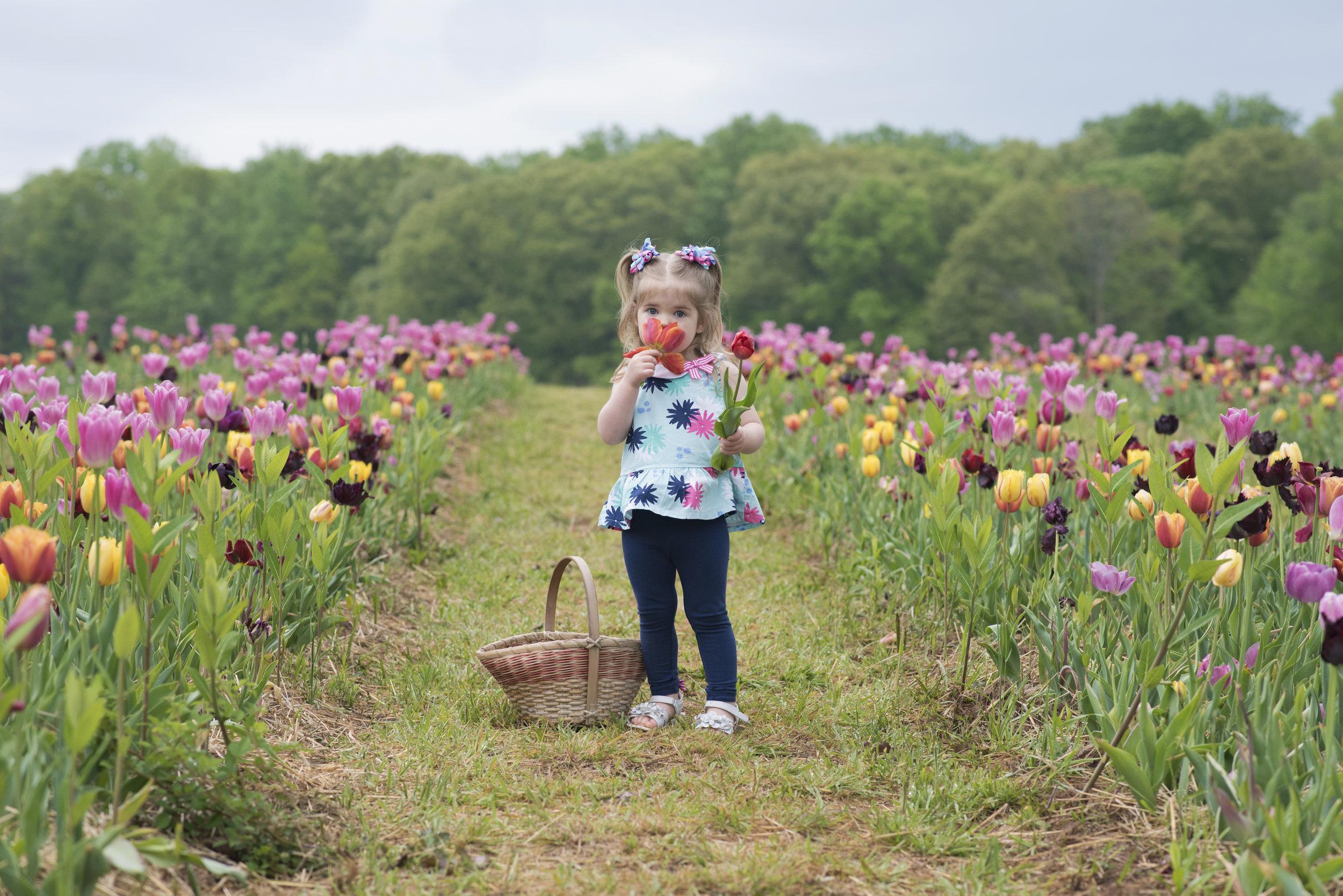 tulip12 copy.jpg