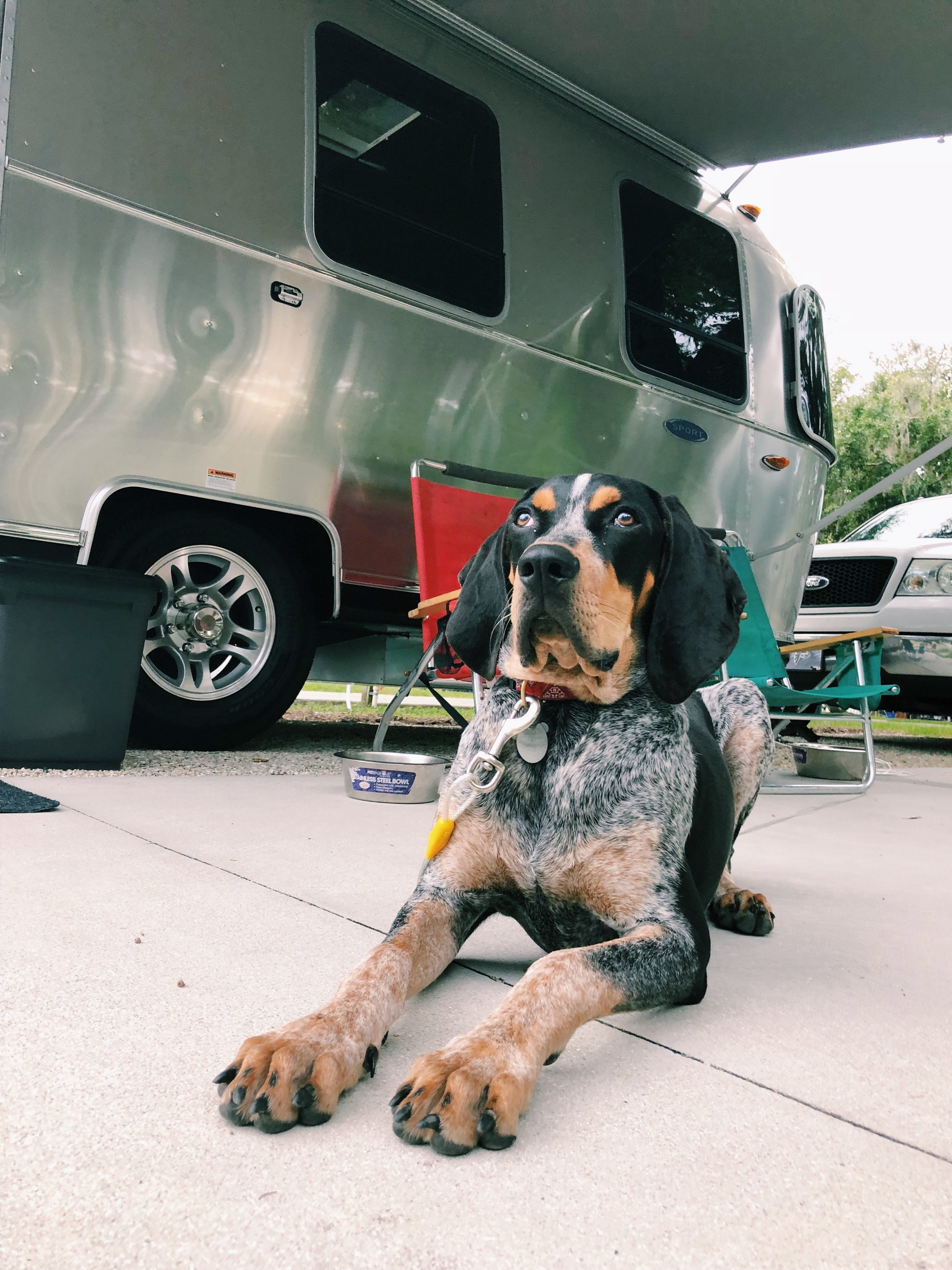 Grover loves camping!