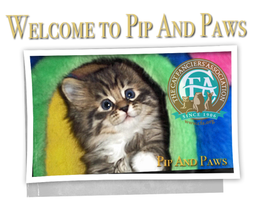 Welcome to PipandPaws located in Comfort, Texas!