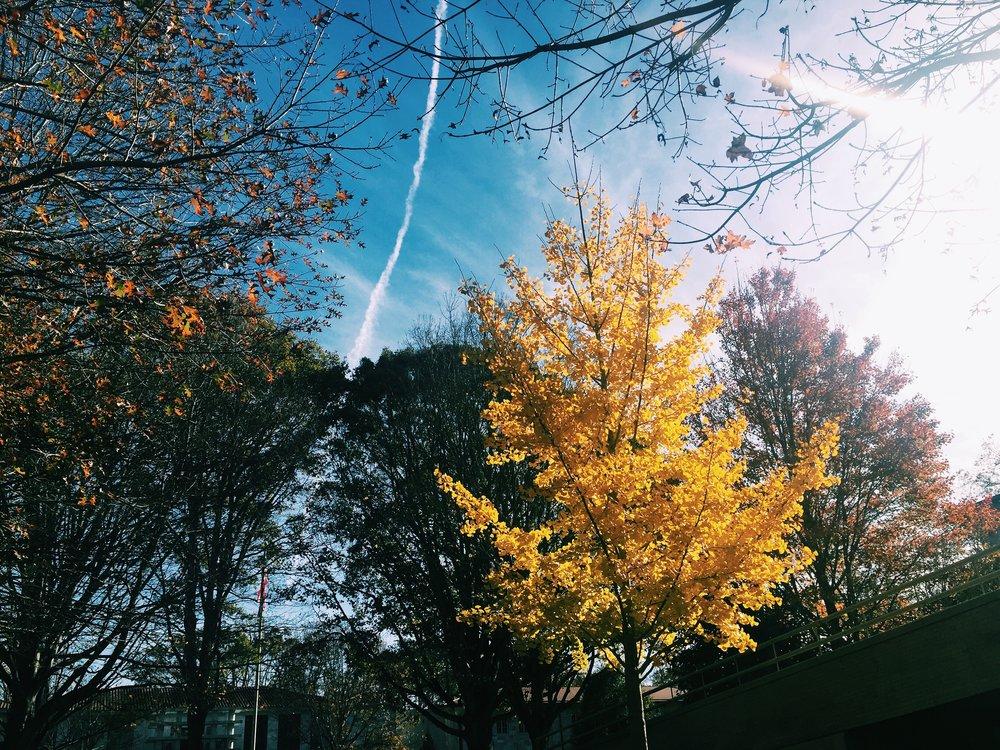 Campus, Fall 2015