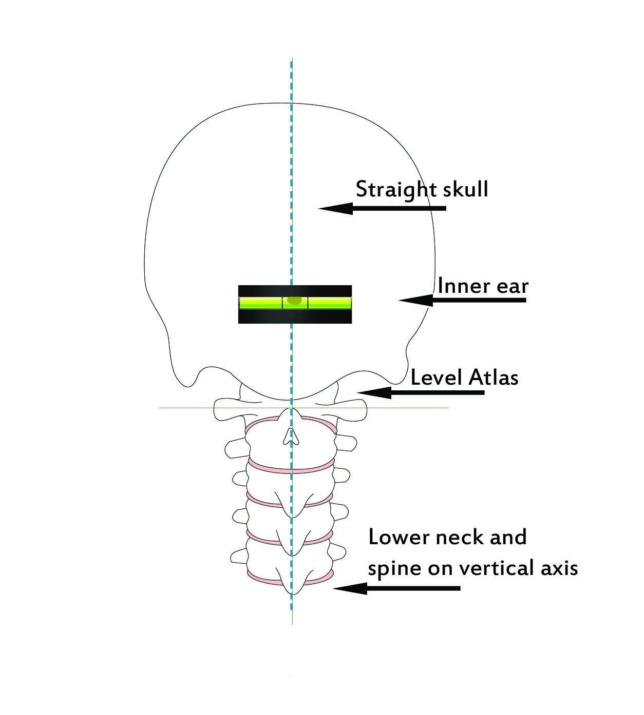 Lower neck and spine on vertical axis - Straight Spine Chiropractic, Courtenay and Campbell River