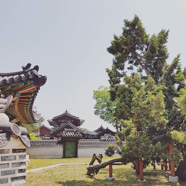 This Chinese juniper tree is believed to be 750 years old, and is 5.6m tall and 5.9m wide.  It was planted to provide incense for ancestral rituals at a nearby shrine. #seoul #changdeokgung #palace #changdeokgungpalace #chinesejuniper #juniper #joseondynasty