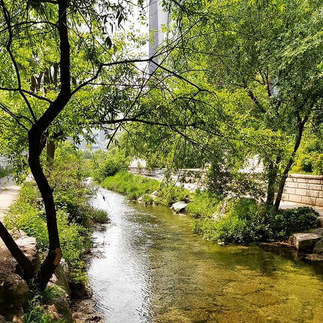 So much green in this city - the #cheonggyecheonstream is a ribbon of water that flows through central #seoul. The water is clear and you can see fish as you cross, using the many stepping stones.  #cheonggyecheon