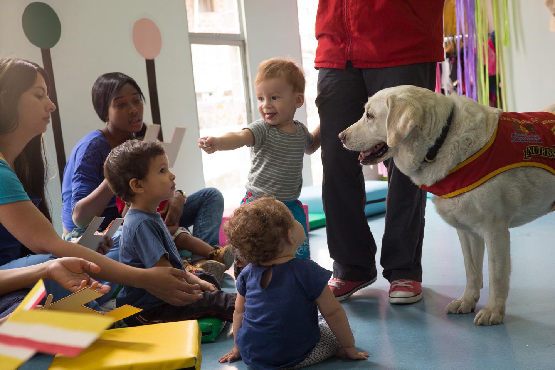 Therapy animal program