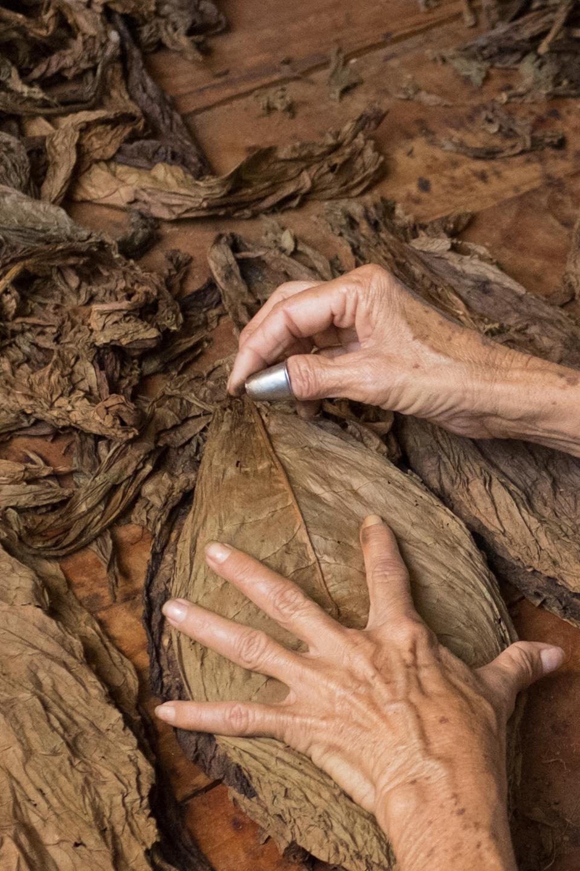 Tobacco worker, Viñales, Cuba.