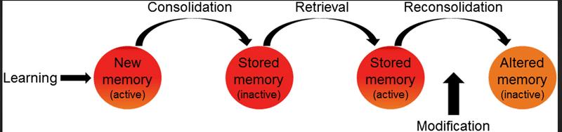 memory 1.png