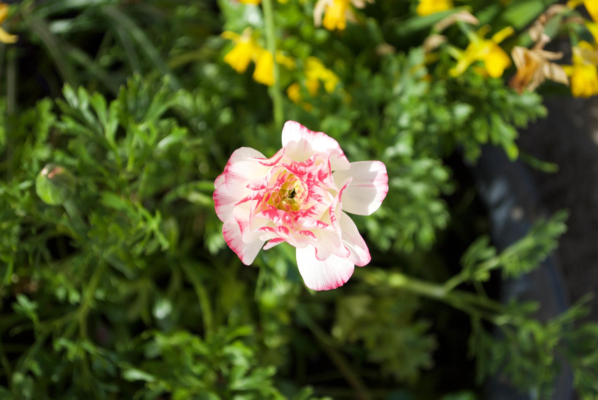 sincerely ashley | flower