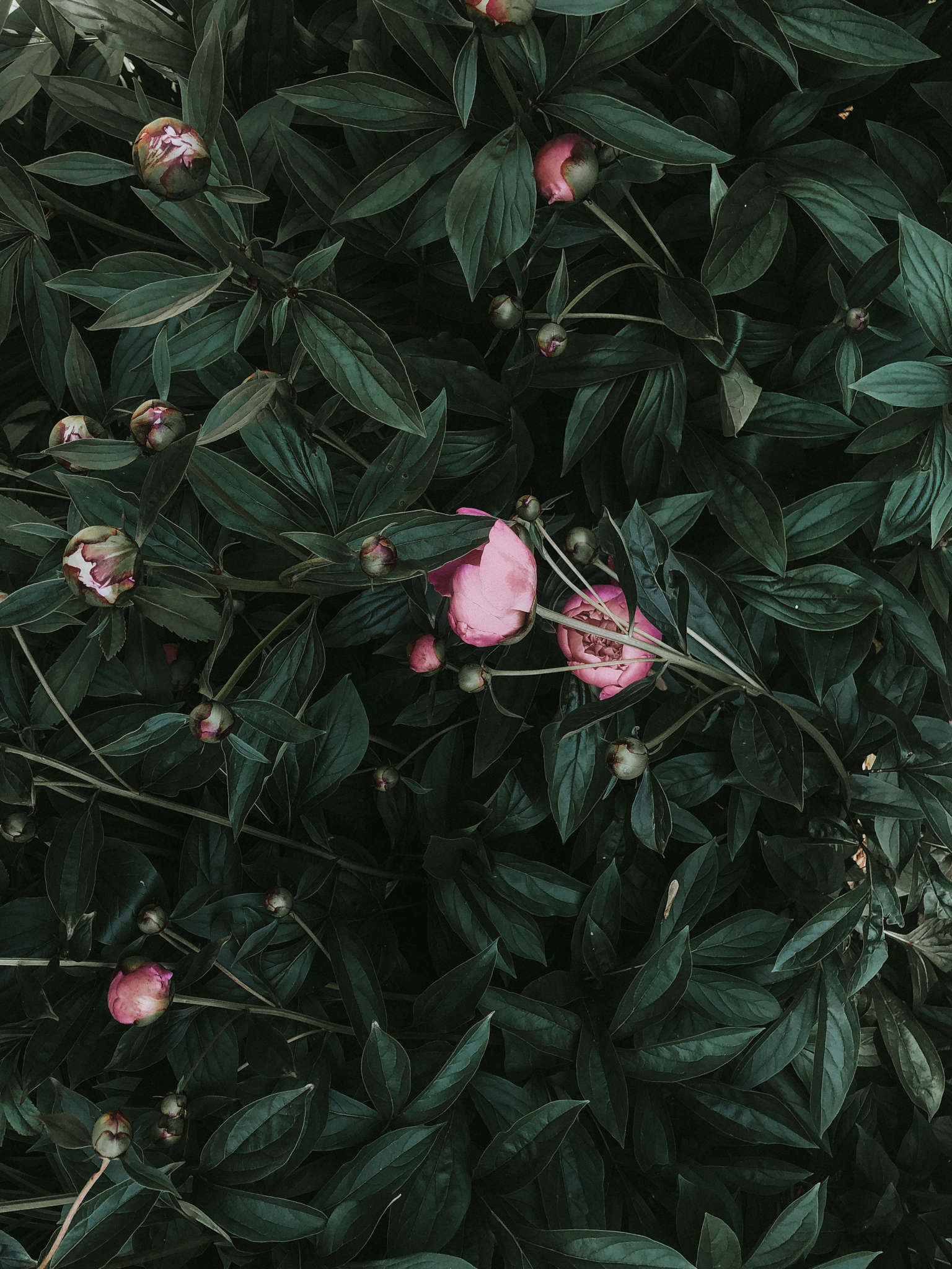 sincerely-ashley-blog