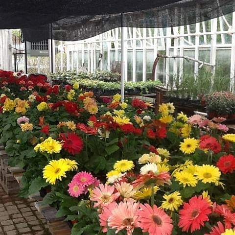 Flower sale at Historical Society, 468 Anderson Ferry Road. Saturday, Sunday, Tuesday,and Thursday, May 4,5, 7,and 9. 10 am - 4 pm.