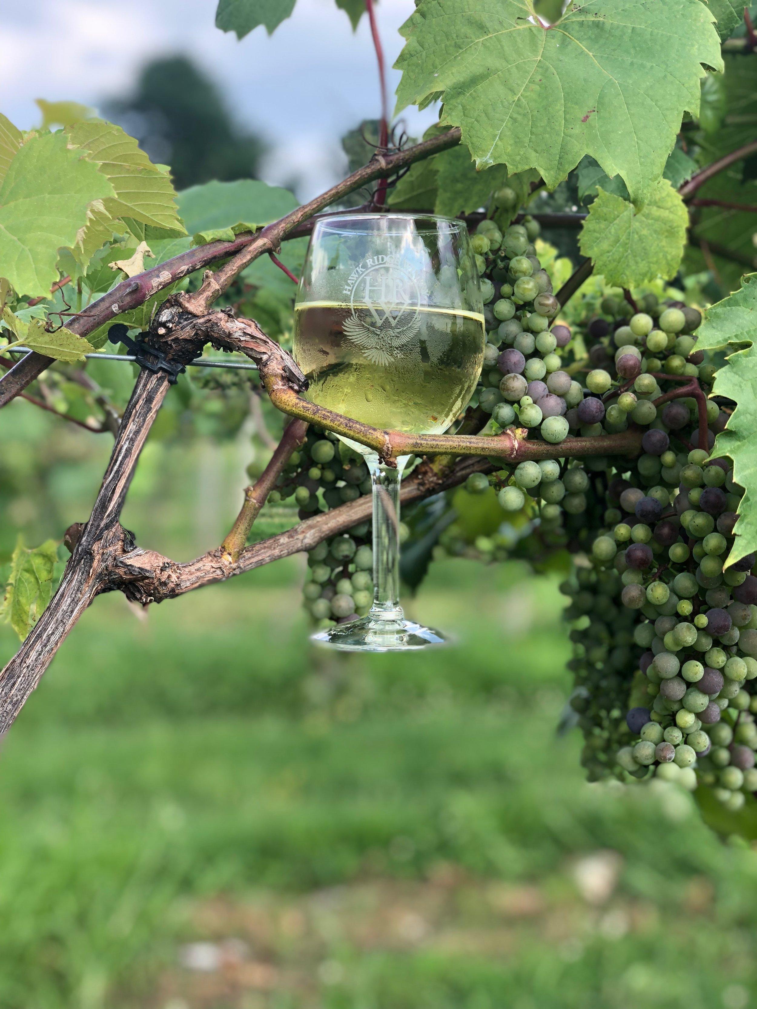 The Hawk Ridge Winery - Process