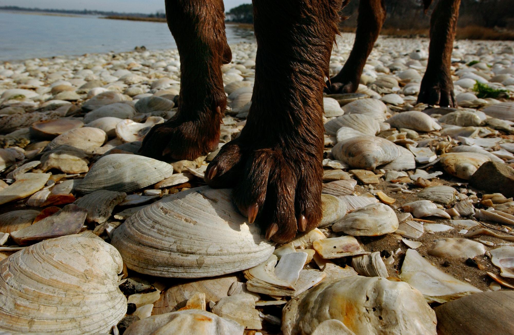 tide water-150.jpg