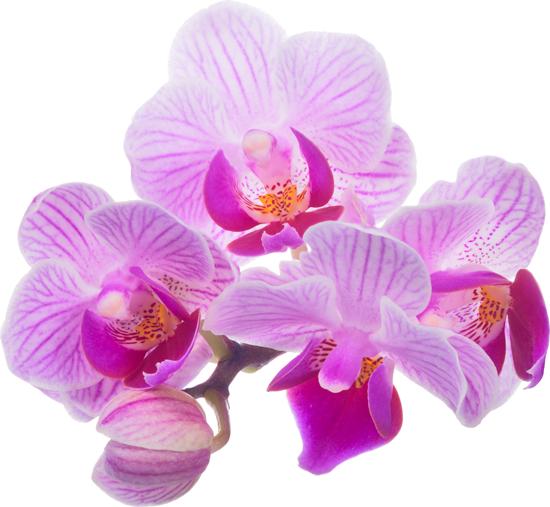 bangkok day spa purple flowers for body scrub
