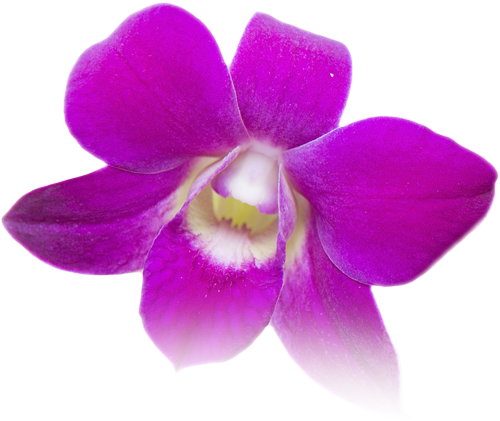 orchid flower for bangkok day spa contact page