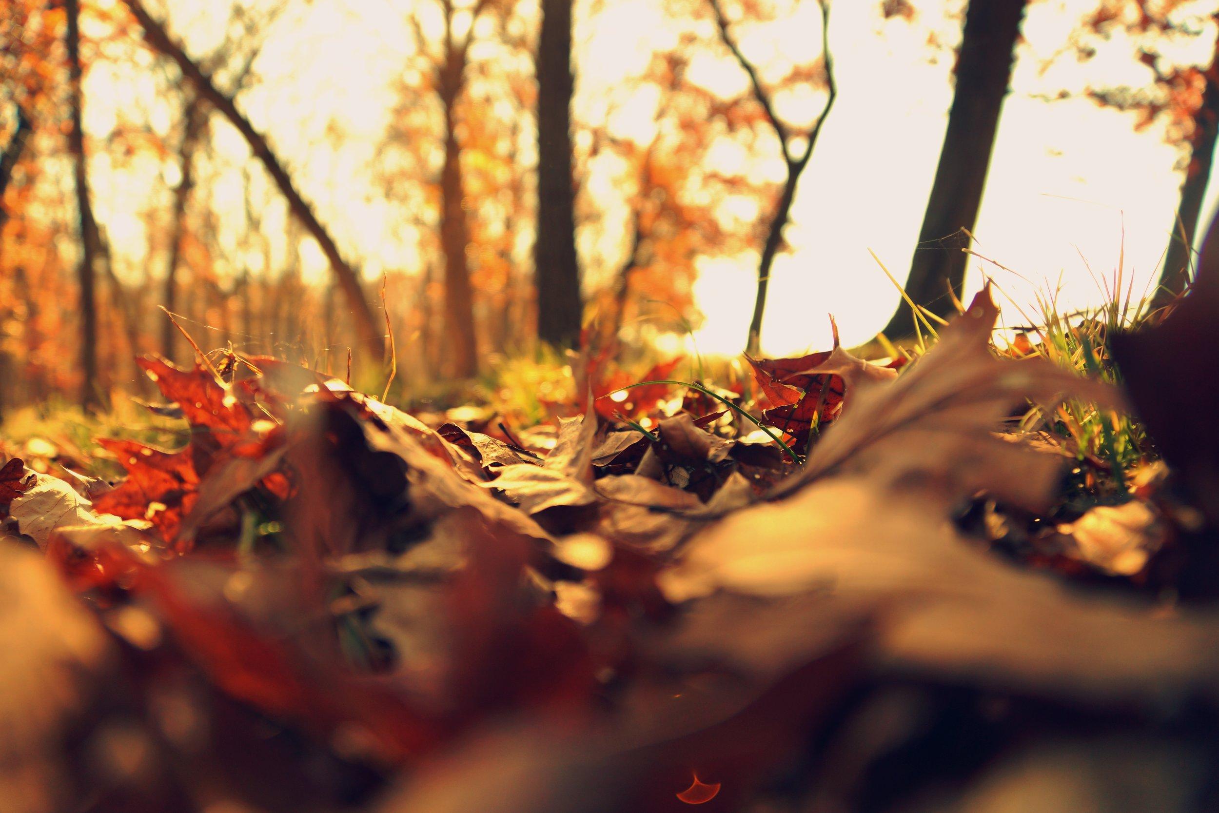 fall2.jpeg