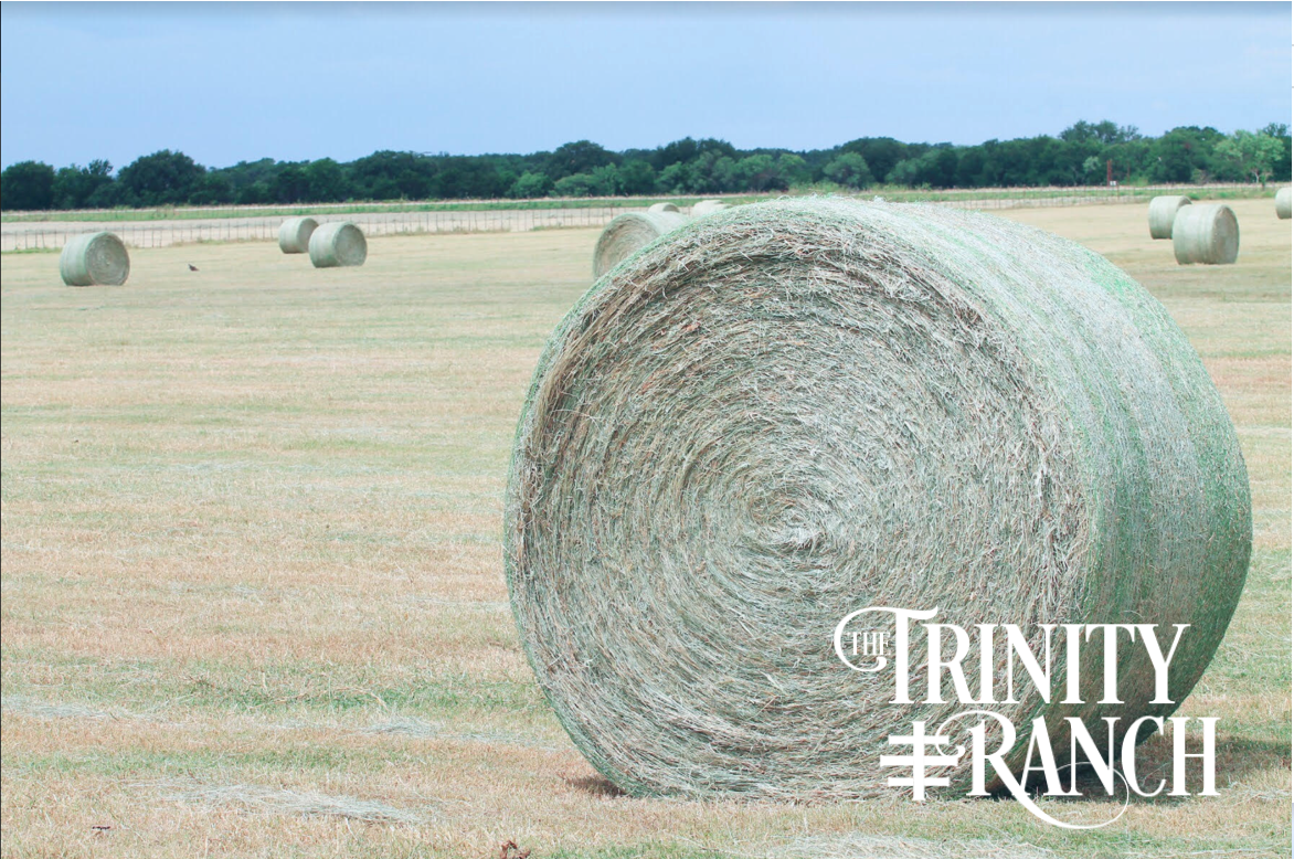 The Trinity Ranch Coastal Bermuda Hay
