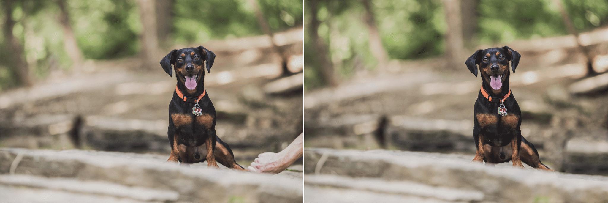 Northwest Arkansas Dog Portrait Photographer