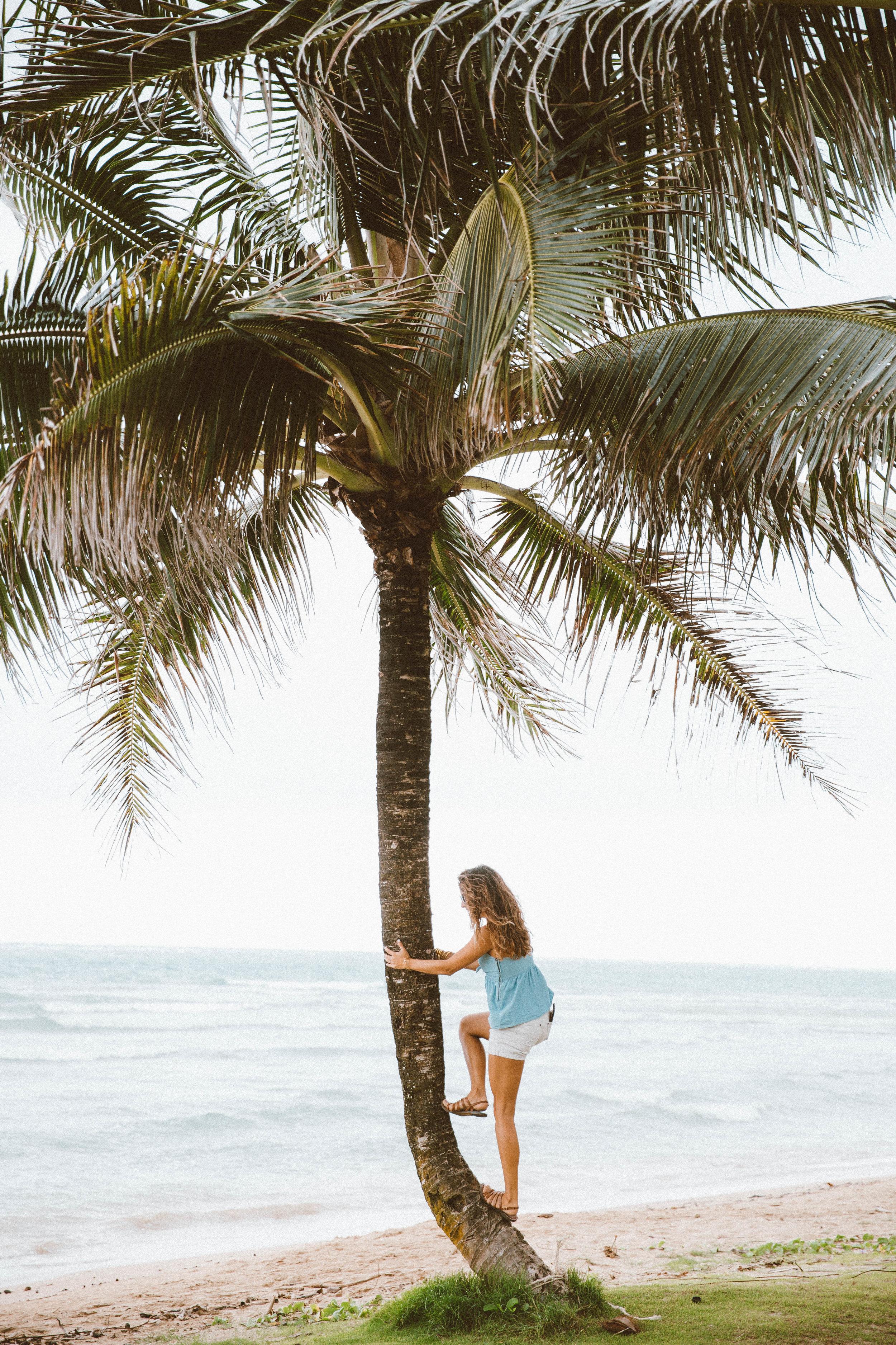 hawaiibloggertravelpalmtree