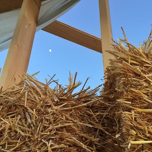 Putting up frames and testing the fit of the straw bales. Today I learned that The Netherlands is ranked last in Europe when it comes to the transition to renewable energy. Confusing news when you spend your days building with straw while surrounded by enormous windmills. . . . #reciproa #ecobouwsalland #ecobouwen #energietransitie #construction #strawbuilding #strobouw #polder