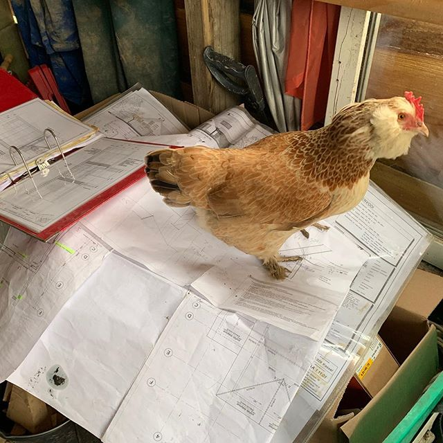 Just because you keep the construction drawings to yourself doesn't mean you are in charge!. . . . #oosterwold #reciproa #constructionworker #technicaldrawing