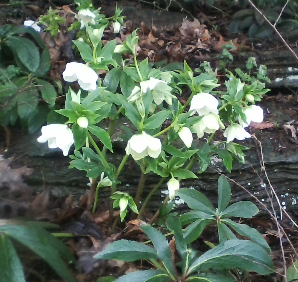 Cheekwood flowers