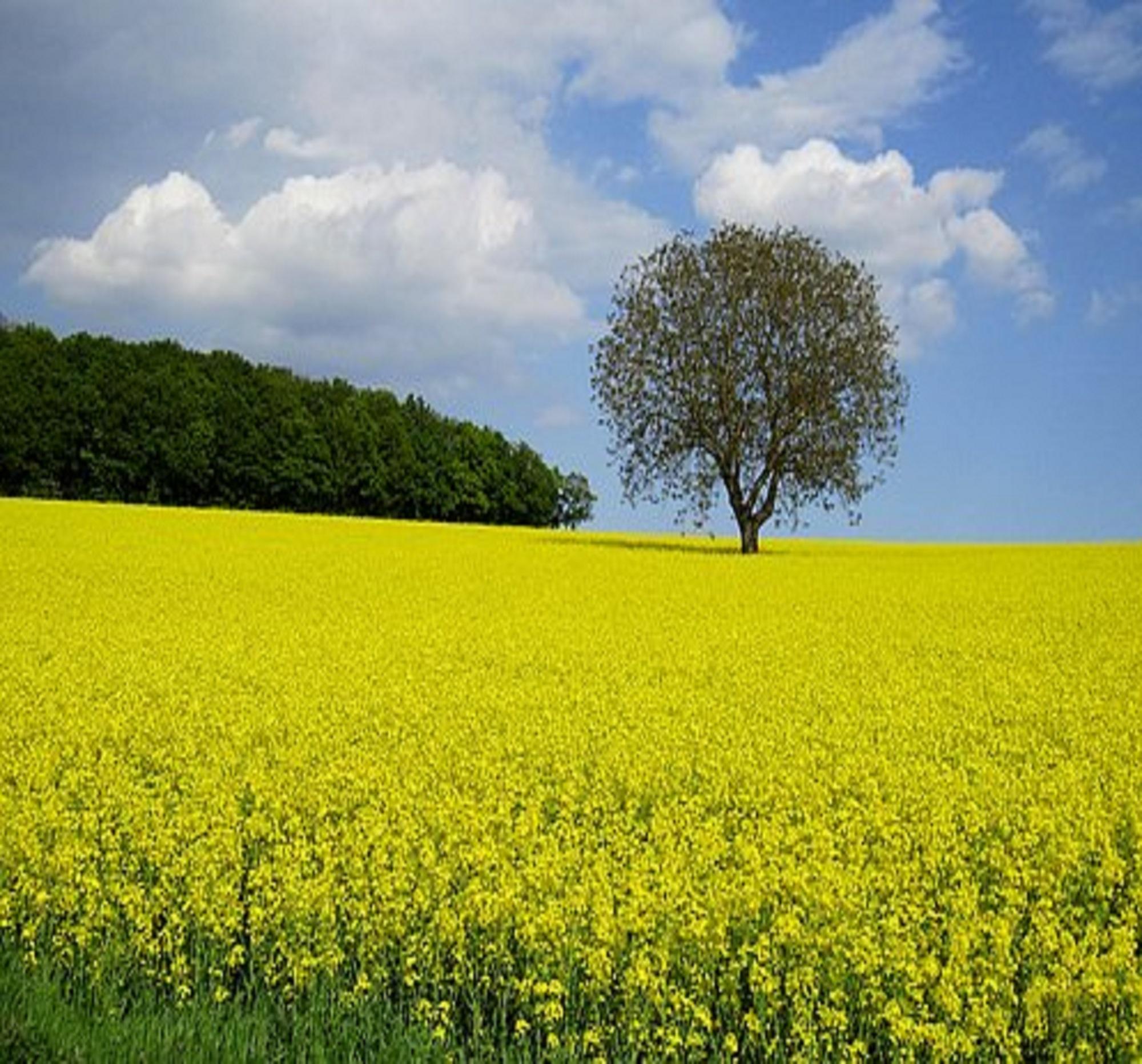 Applied Bio-minerals - ABM - sustainable Farming.jpg