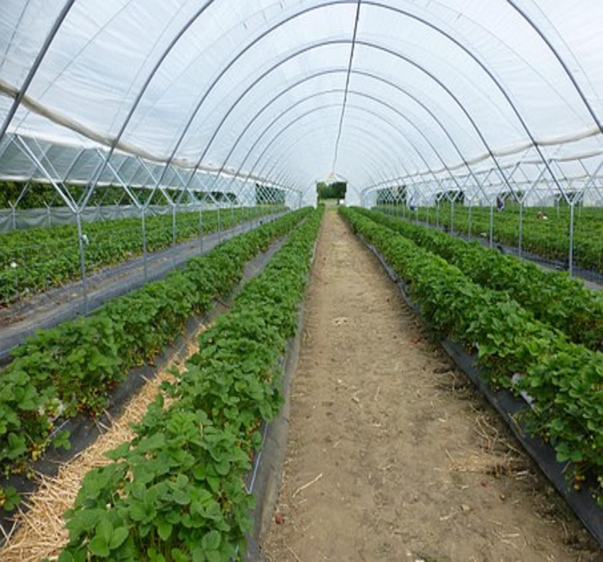 Applied Bio-minerals - ABM - Bio Active Farming.jpg