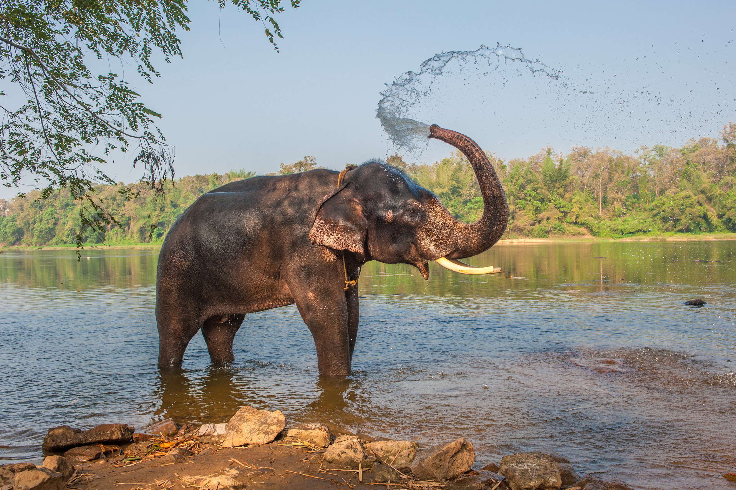 Washing-with-the-elephants-in-India.jpg