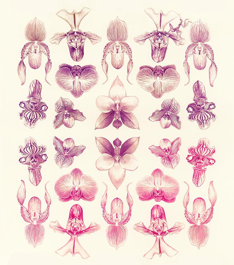 orchidgradient_thumb.jpg
