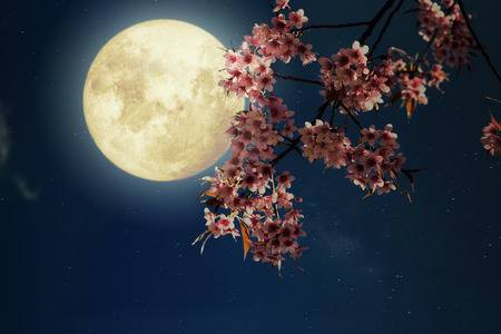 sakura-flowers-with-full-moon.jpg