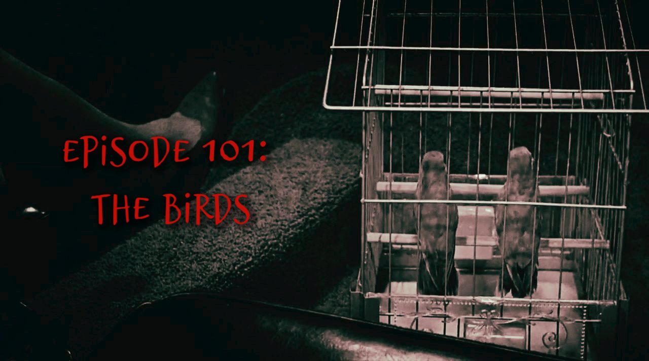 the-birds-cage-title.jpg