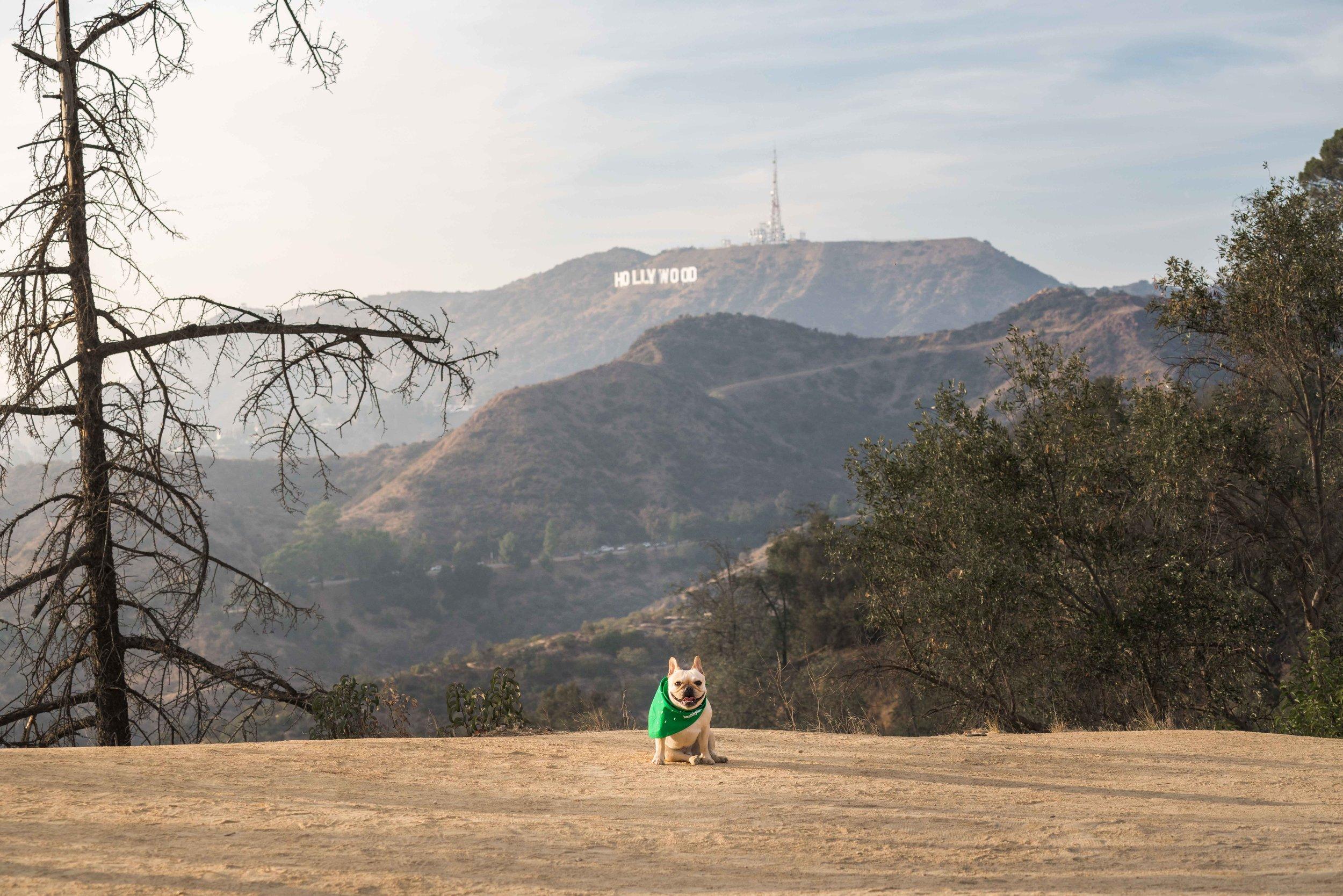 Healthy Spot LA Locations_small-69.jpg