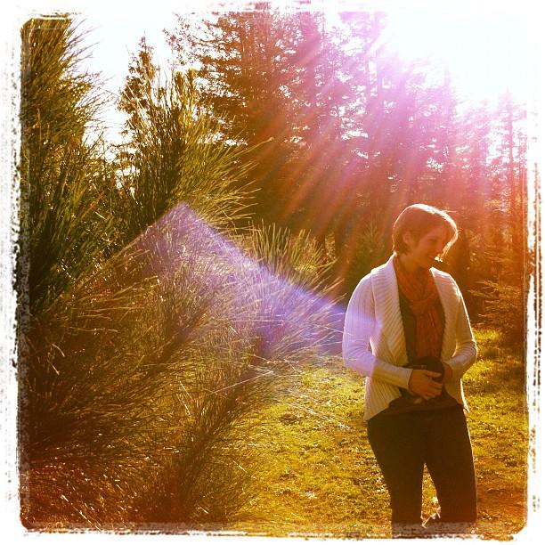 Into the tree farm (Taken with  instagram )
