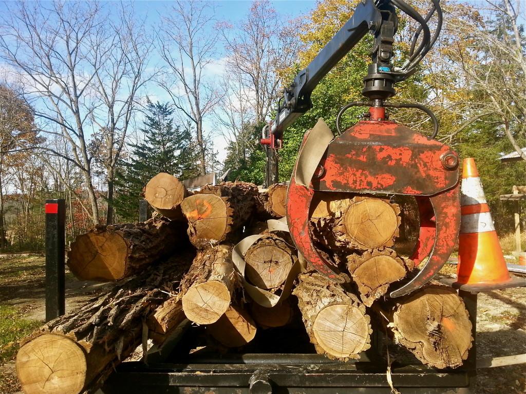 Lumber_Claw_NYH.jpg