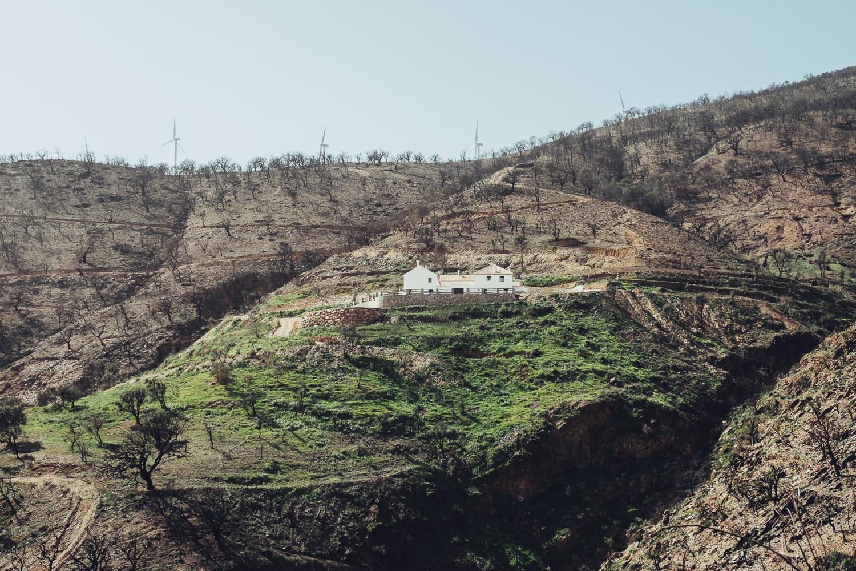 Dorija Apple Parsley_Mt.Lújar-6317