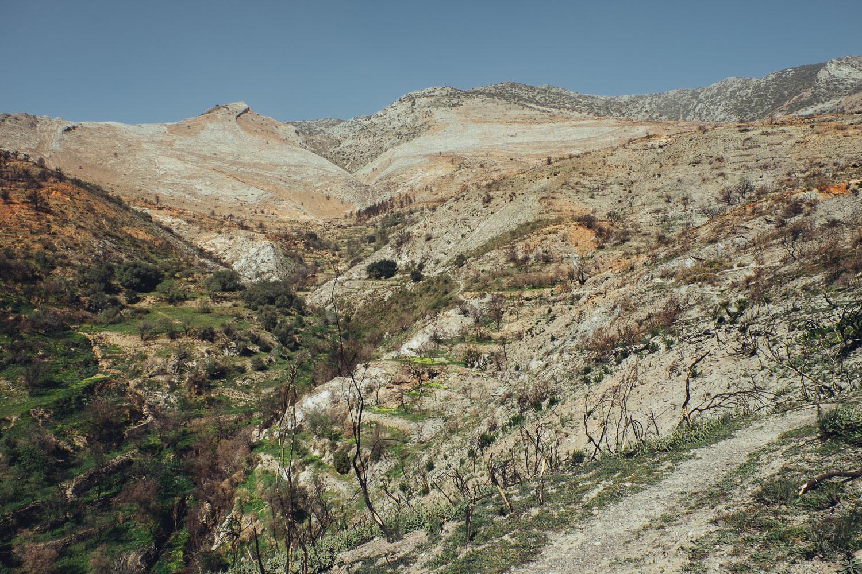 Dorija Apple Parsley_Mt.Lújar-6322
